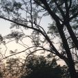 chandigarh leisure valley birds in tree