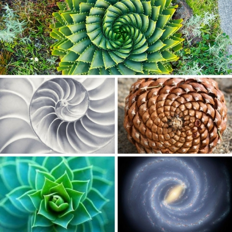spirals-and-fractals